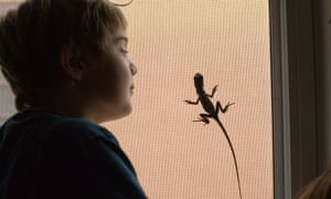 Boy studying a young frilled lizard.