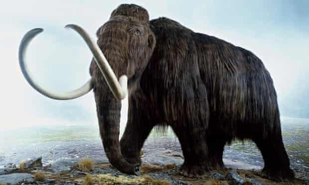 Woolly mammoth model