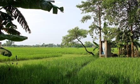 MDG sanitation in India
