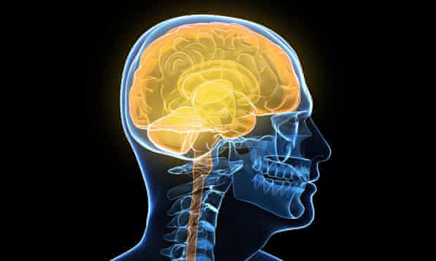 Artist's impression of a human brain