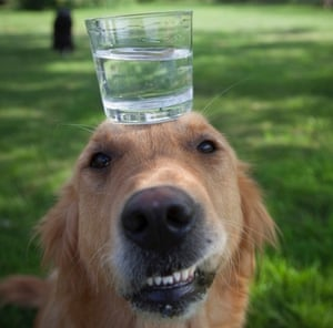 Mona the dog with glass of water
