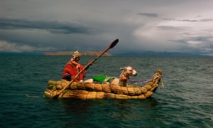A llama travels across the Titicaca lake by boat