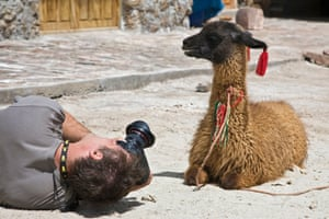A photographer takes pictures of a llama in Altiplano