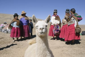 A llama photobombs picture of women