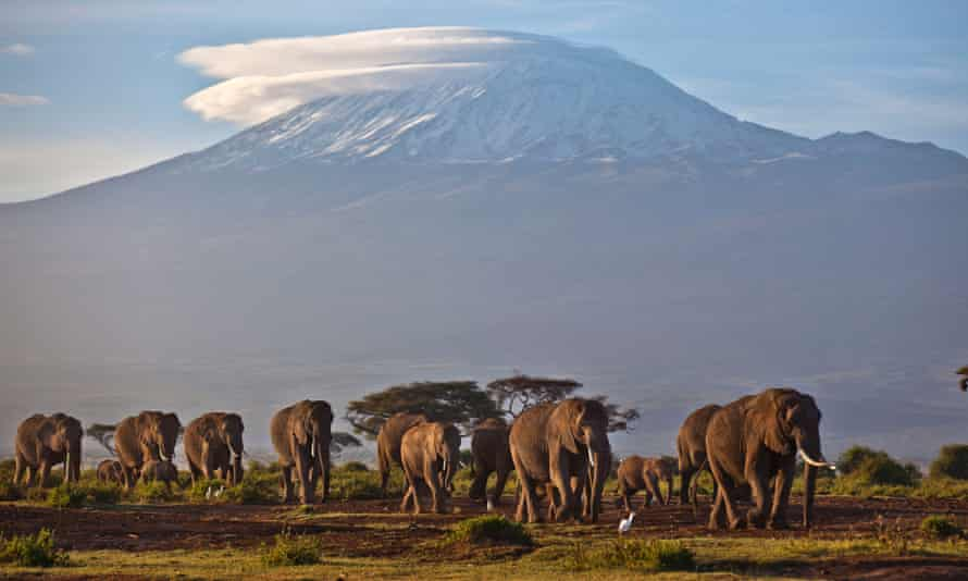 A herd of adult and baby elephants walks in the dawn light, in Amboseli National Park, southern Kenya.