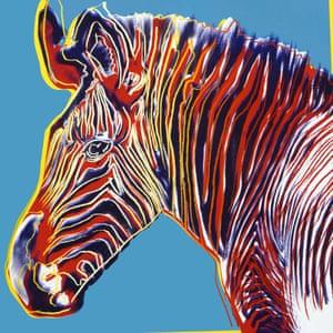 Grevy's Zebra, 1983