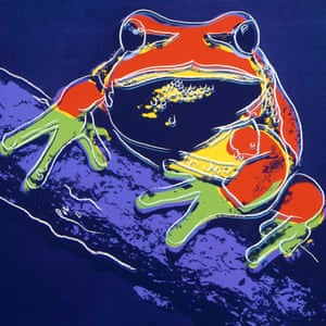 Pine Barrens Tree Frog, 1983