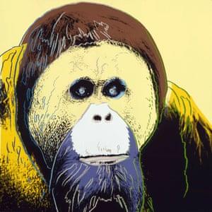Orangutan, 1983