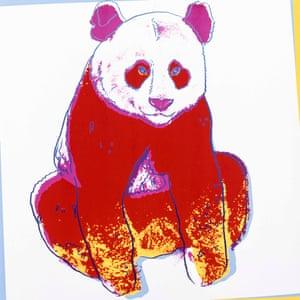 Giant Panda, 1983