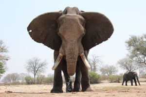 Bull elephant Bull in Hwange national park