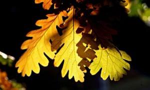 Autumn Scenes Over Primrose Hill