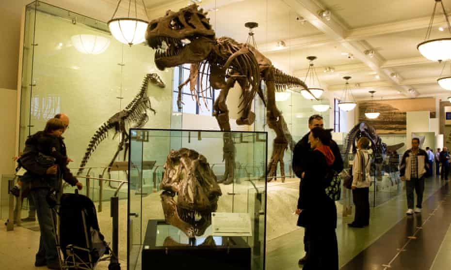 Dinosaurs in the American Museum of Natural History in New York.