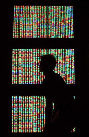 A visitor views a digital representation of the human genome at the American Museum of Natural History in New York City.
