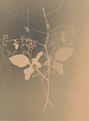 From the Weeds of Hiroshima, 1997. João Penalva's photograms resemble the horrifying imprints of people and wildlife that appeared throughout Hiroshima, caused by the immense light of the nuclear explosion.