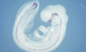 Scientists create lab-grown spinal cords | Science | The