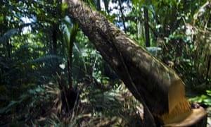 Amazon deforestation brazil