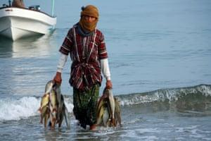 Oman, Barka fish market, early morning
