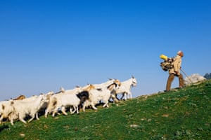 Danny Fernandez goat herder