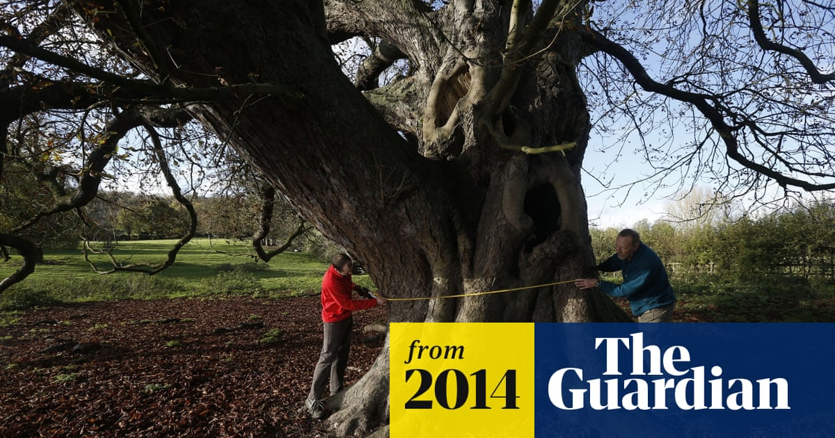 A 300 Year Old Horse Chestnut Tree Named Uk S Largest