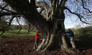Hughenden Manor ranger Steve Kirkpatrick (left) and volunteer ranger Chris Raymond measure the largest horse chestnut tree in the country at Hughenden estate, near High Wycombe, Buckinghamshire, November 12, 2014. The veteran tree is over 300 years old and also has the largest girth in the country, measuring just over 24 feet and has been given the accolade of Champion Tree by the National Tree Register.