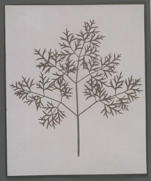Botanical specimen, c.1840.