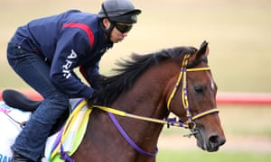 Admire Rakti during trackwork ahead of the Melbourne Cup