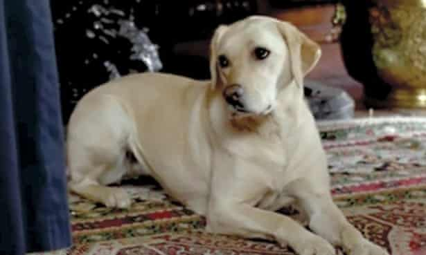 Isis the Downton dog