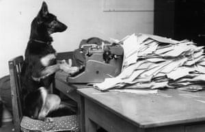 Petra dog typewriter
