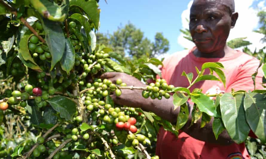 MDG Agriculture in Kenya