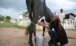 A Ugandan woman milks a cow, as part of the Miss Uganda beauty pageant.