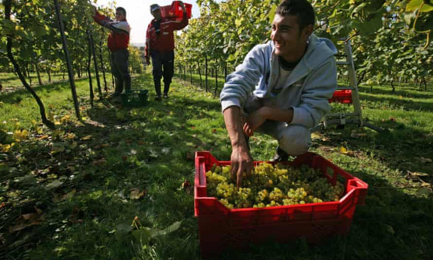 Romanian migrants at work in Sussex