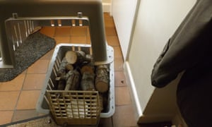 Firewood in a cat basket