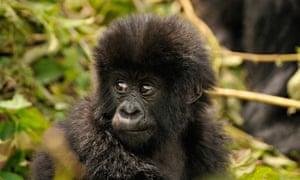 Top 10 Monkey Books For Children