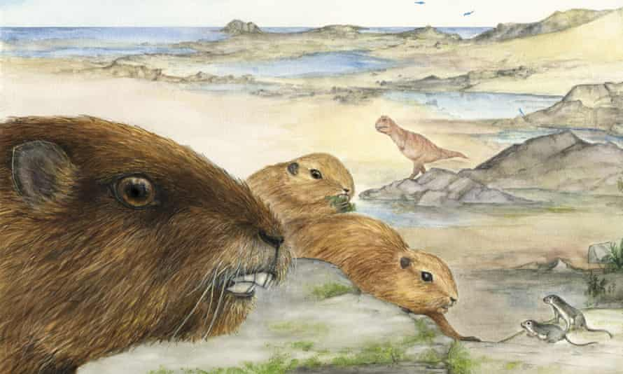 """Illustration issued by Stony Brook University of a prehistoric """"groundhog"""" that had its day during the reign of the dinosaurs, which has been identified by scientists, November 5, 2014. The rodent-like Vintana sertichi was one of the largest known mammals of its time, weighing an estimated 20 pounds."""