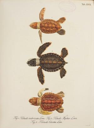 opulent oceans hatchling turtles