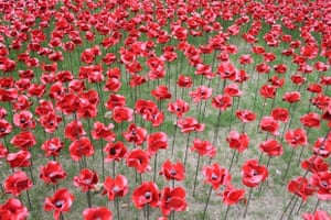 Tower of London WW1 Remembrance Installation I was part of the volunteer planting team a few weeks ago. It was a real privilege to be involved with this project. The poppies are stunning