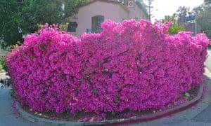 Flowers LA