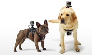 GoPro Fetch harness for dogs