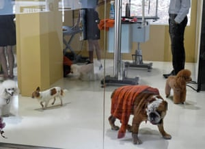 In the final photograph this week, dogs walk in a spa and grooming room at the Wagington luxury pet hotel in Singapore. The hotel, a converted colonial-era bungalow, opened its doors last week, offering an array of facilities including a bone-shaped swimming pool