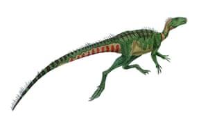 Dino point 6