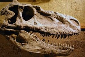 Dino point 4