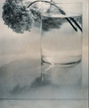 Still life, hydrangea, 1907. by Baron Adolph de Meyer