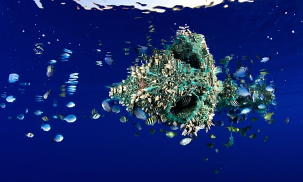 Plastic pieces in the ocean damage wildlife and enter the food chain when ingested by fish. Photograph: Bryce Groark/Alamy