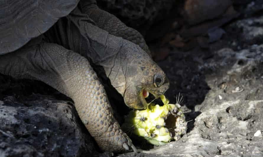 galapagos islands tortoise charles darwin