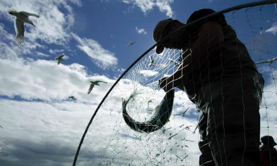 fisherman catches fish, seagull flies overhead
