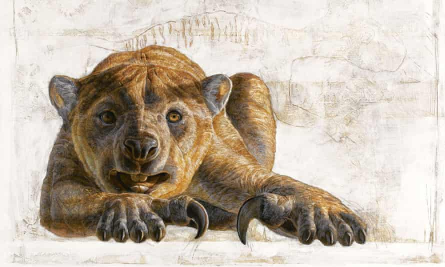 A marsupial lion, Thylacoleo carnifex.