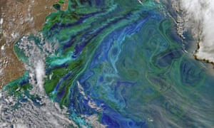 Late spring and summer weather brings blooms of color to the Atlantic Ocean off of South America, at least from a satellite view. The Patagonian Shelf Break is a biologically rich patch of ocean where airborne dust from the land, iron-rich currents from the south, and upwelling currents from the depths provide a bounty of nutrients for the grass of the sea   phytoplankton. In turn, those floating sunlight harvesters become food for some of the richest fisheries in the world.