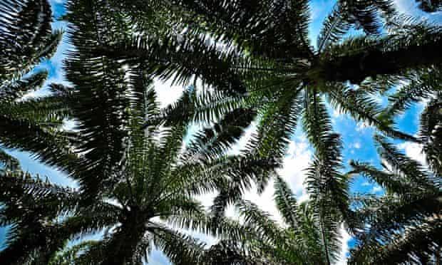 Palm oil plantation Sumatra