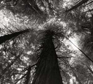 King's Canyon Sequoias, USA, 2006.