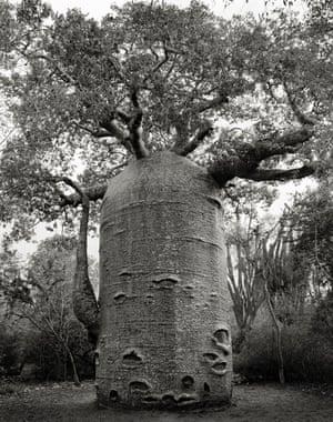 The Ifaty Teapot, Madagascar, 2006